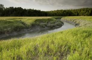 campbell creek 1