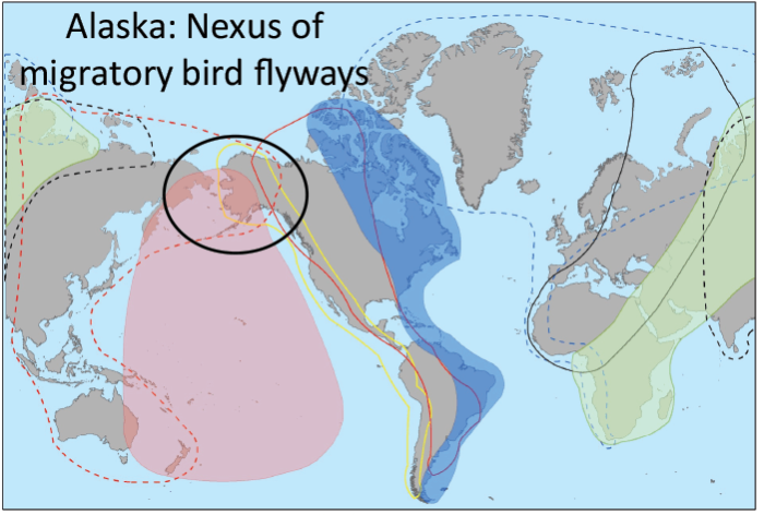 alaska-flyways.png