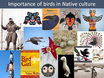 Birds Native culture.png